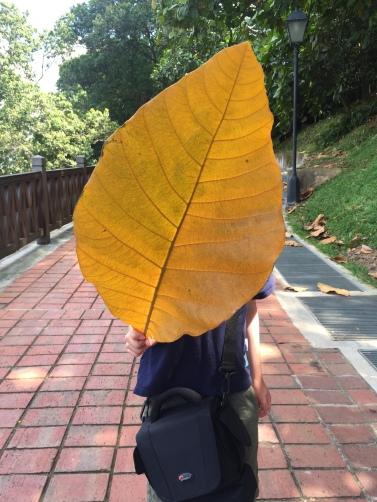 A Giant Local Leaf