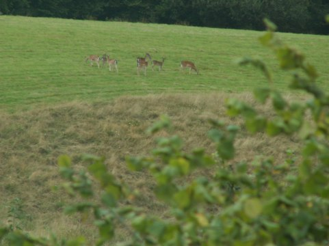 My Brother's Photo of Grazing Deer